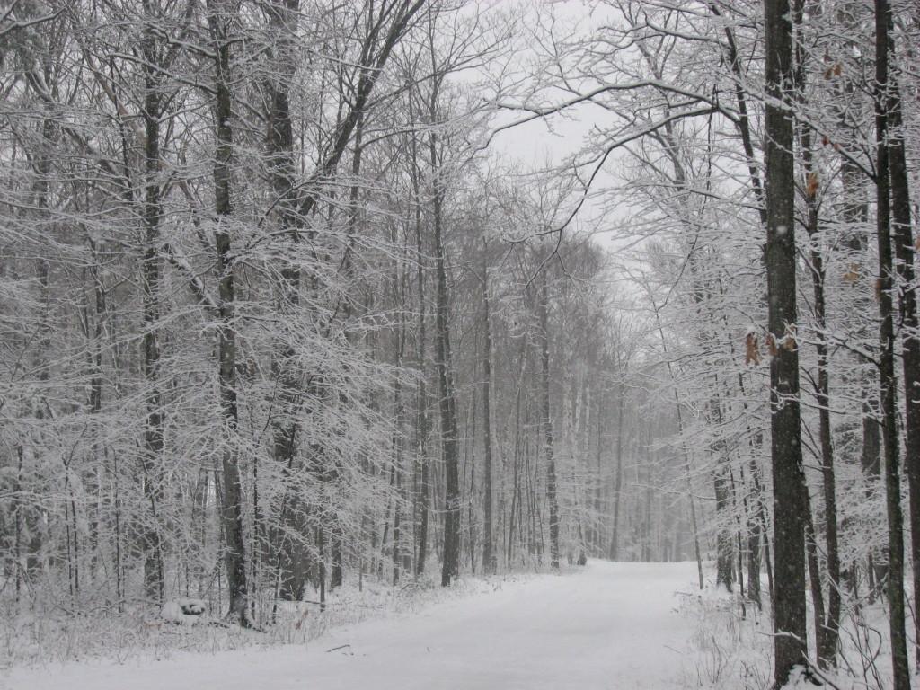 Winter near Lake DuBay
